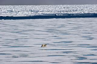 Arktis 0004