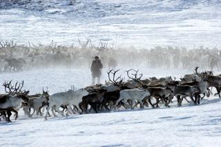 Arktis 0007